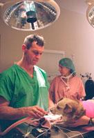 Dr. Watt at Work