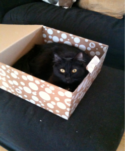 Eby loves making every box hers