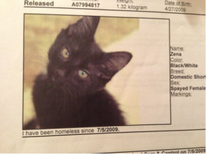 Eby's profile from the SPCA