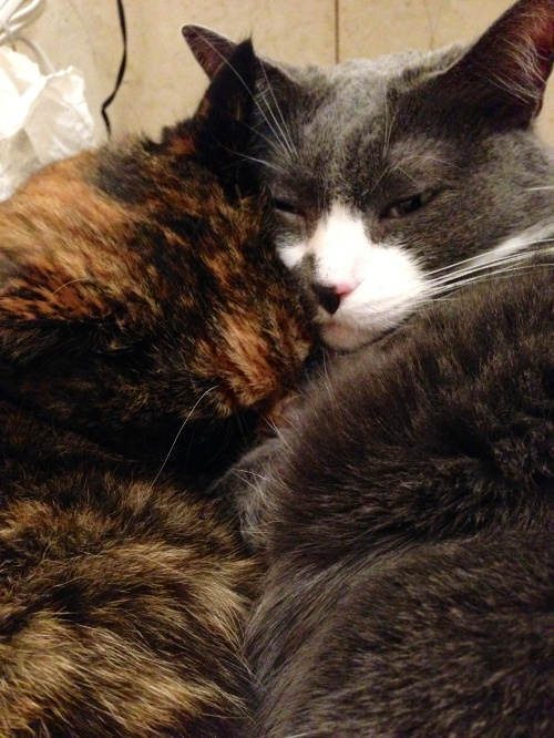 kitty-hug-patient-story-bella