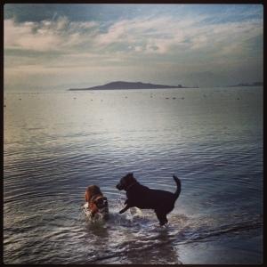 Sirius and friend at play