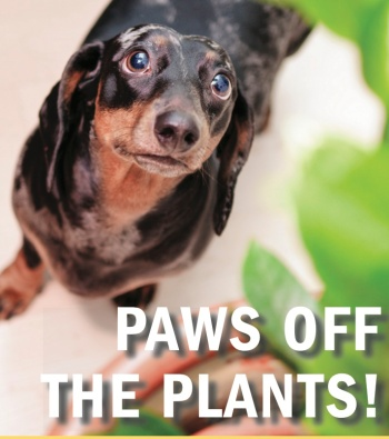 dog-plant
