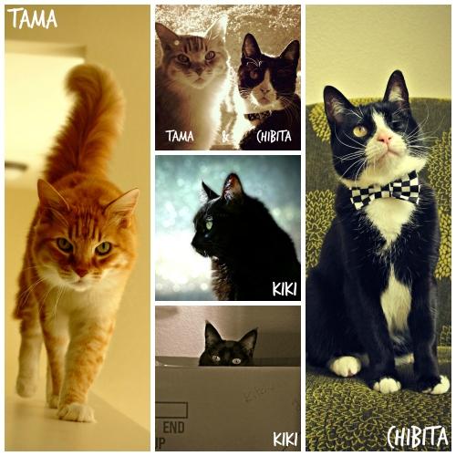 naomi-cats